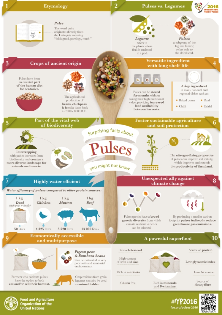 IYP-Pulses-Facts-infographic.jpg